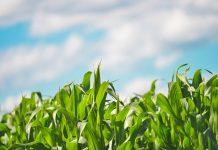 Realizările în cifre ale Guvernării PSD în România în domeniul agriculturii