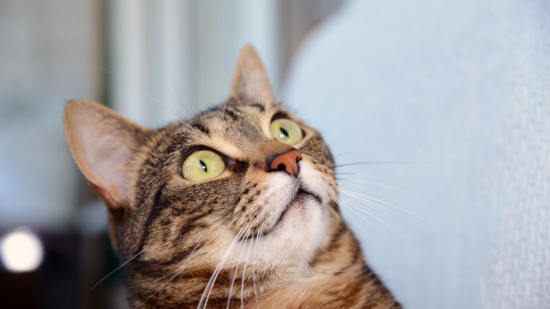 O pisica a băgat în spital o bătrână