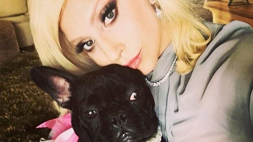Lady Gaga și-a recuperat cei doi câini furați