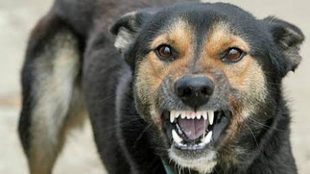 La Arad, bunică mușcată de un câini