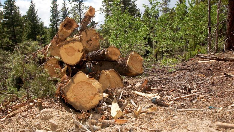 Cipuri și camere inteligente pentru supravegherea arborilor din pădurile României