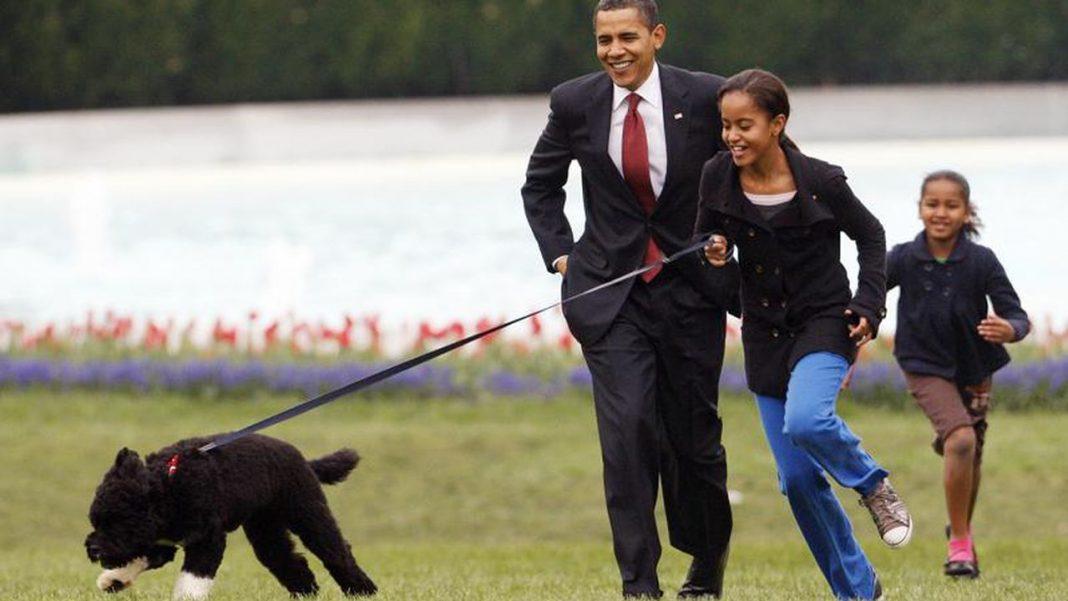 Bo, câinele lui Obama, a decedat. Patrupedul suferea de cancer