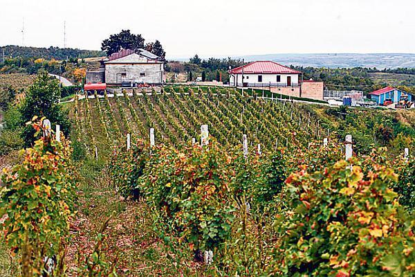 Casa de vinuri a guvernatorului