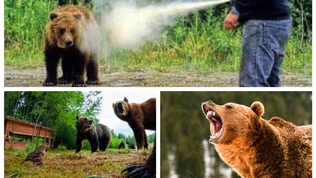Dacă te atacă ursul