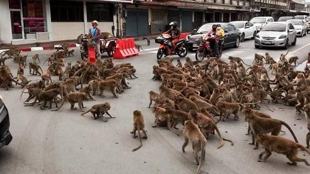 Maimuţe